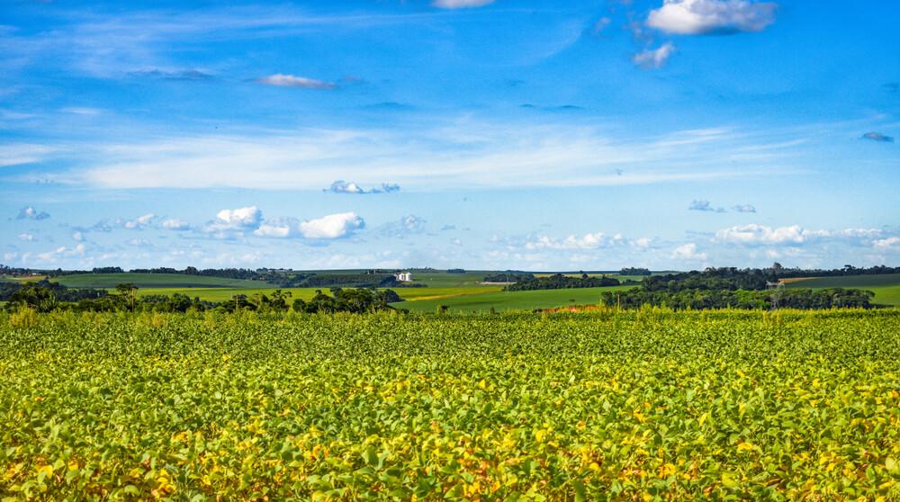 paisagem agrícola da cidade de toledo paraná